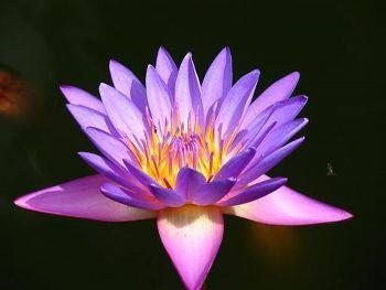 Img Flower 1 92D57296